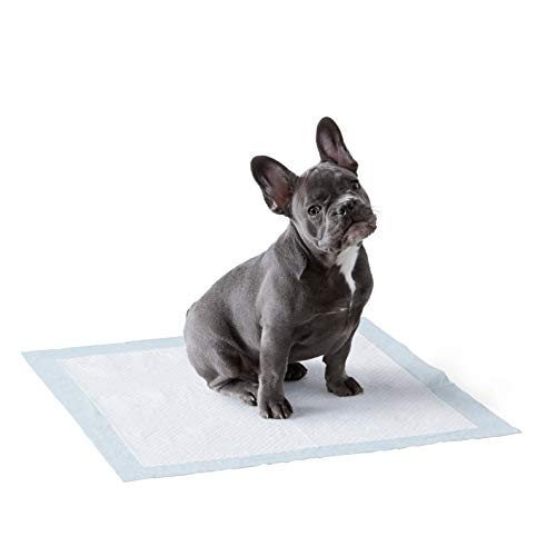 Amazon Basics Puppy Pads Trainingsunterlagen für...