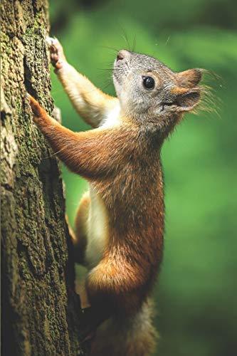 Eichhörnchen Notizbuch: blanko Malbuch / Tagebuch...