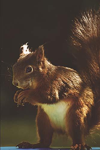 Eichhörnchen Tagebuch: Notizbuch / Notizheft mit...