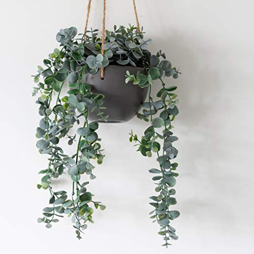 Hängepflanze, Eukalyptuspflanze, 75 cm, Keramik,...