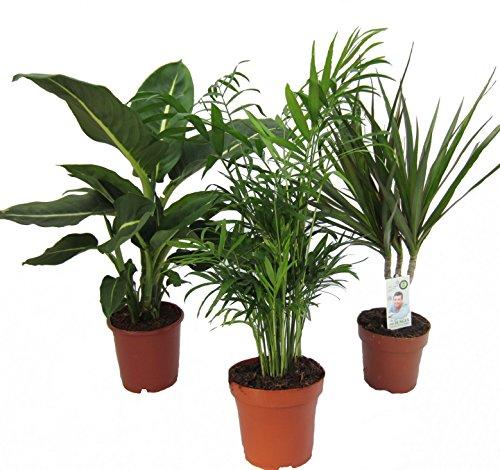 Dominik Blumen und Pflanzen, Zimmerpflanzen Set...
