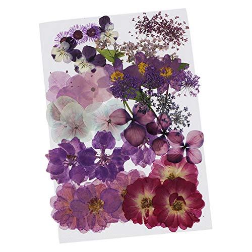 dailymall Gepresste Blumen Getrocknete Blätter...