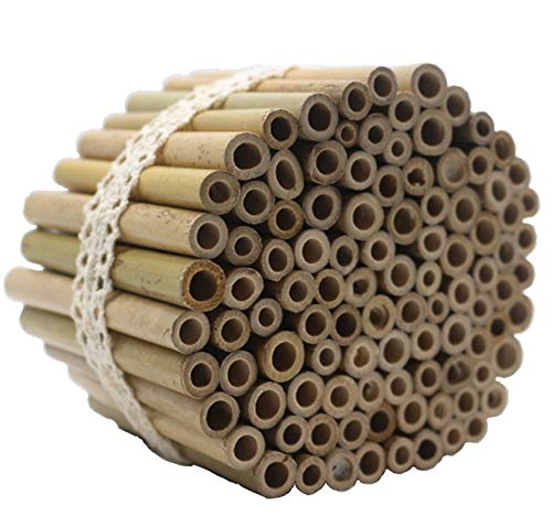 Super Idee 200 Stück 10cm Länge Bambusröhrchen...