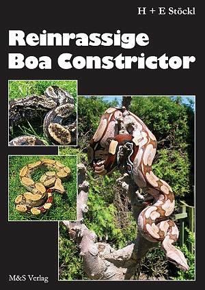 Reinrassige Boa constrictor
