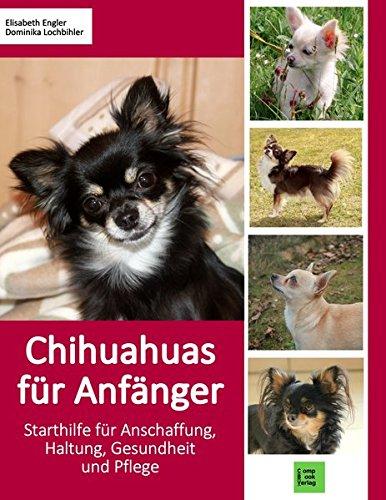 Chihuahuas für Anfänger: Starthilfe für...
