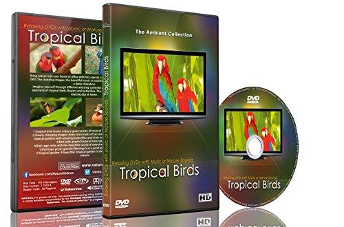 Entspannungs DVD - Tropische Vögel mit Musik oder...
