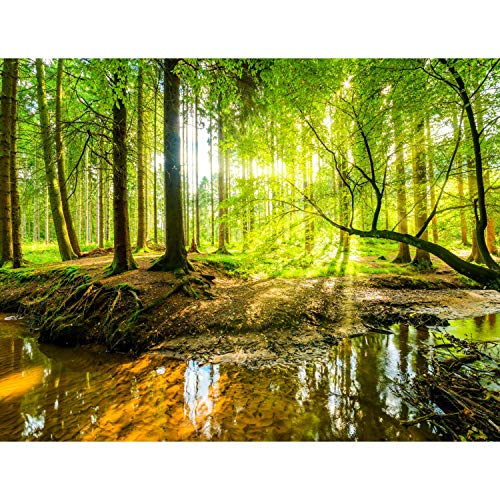 Runa Art Fototapete Wald Bach Modern Vlies...