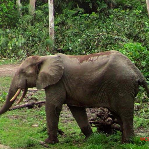 Suivi de la gestion de la faune dans les forêts...